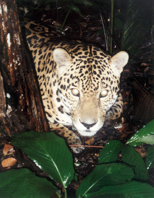 on-the-paths-of-life-in-the-amazon-featured